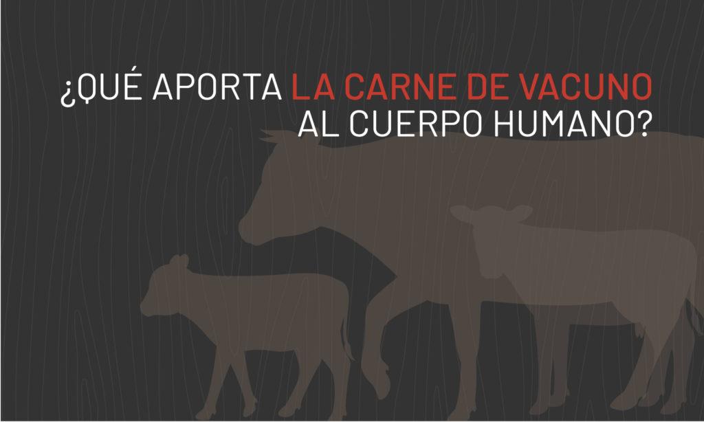 Aporte de la carne al cuerpo humano